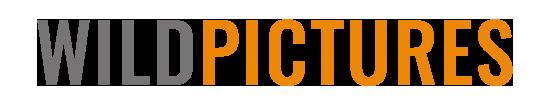 Wildpictures Media